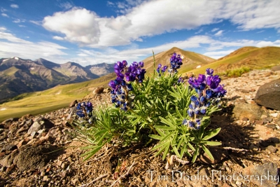 High Country Blooms