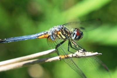 Dragon Fly 6841