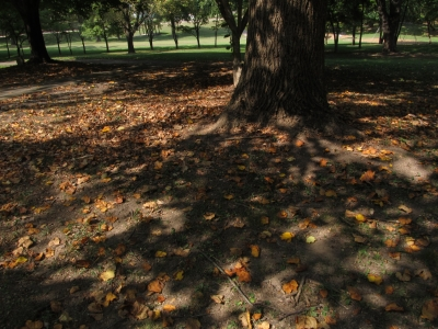 Shadows And Light At West View Park