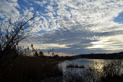 Winter Afternoon On Cape Cod