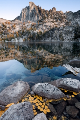 Larch Needles In Temple Lake, The Enchantments