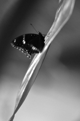 Butterfly On The Leave