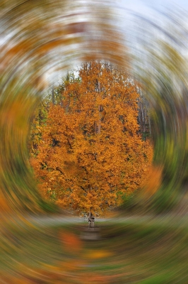 Fall Colors In A Whirl