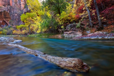 Zion Narrows In The Fall
