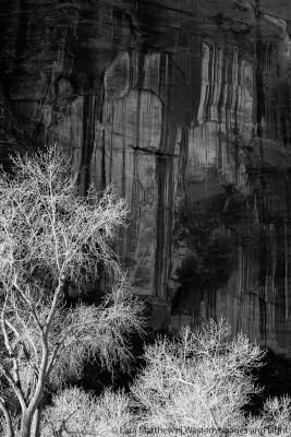 Winter Canyon Light