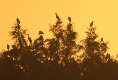 Waders At Sunrise