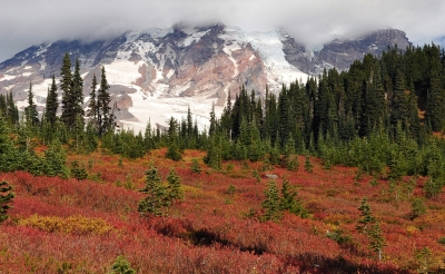 Fall Afternoon At Mt Rainier