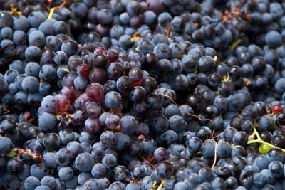 Grapes From The Hill Country