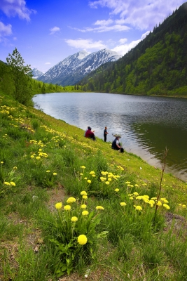 Alaska, Wild Flowers, Lake, Kenai Peninsula
