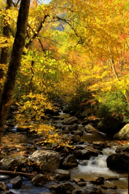 Fall In The Smoky Mountains Hdr