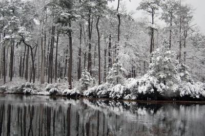 Snowy Reflections