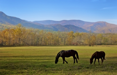 Horses In The Smoky Mountains