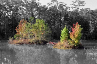 Color Among The Pines