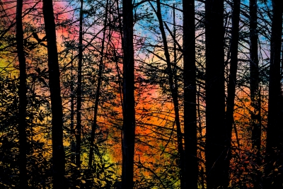 Trees Silhouetted Against Bright Autumn Foliage