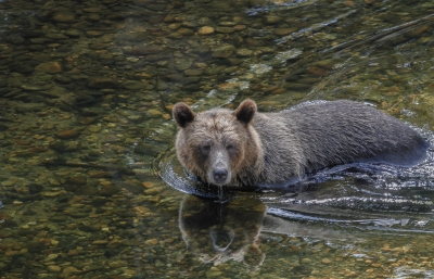 The Search For Salmon