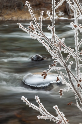 Frost At The Truckee River