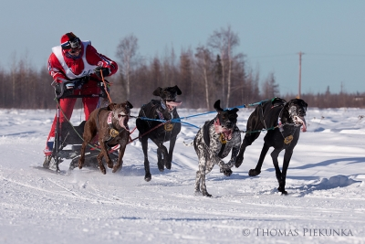 Finland Airborn Dogsled