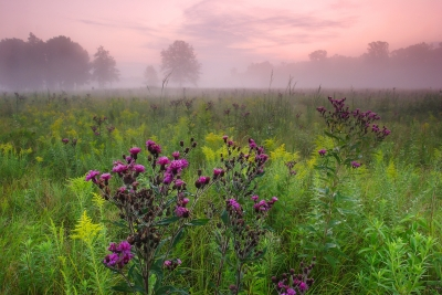 Foggy Lakeplain Prairie Dawn