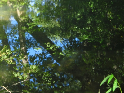 Reflection In A Creek