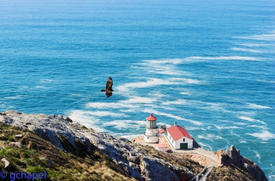 A Vulture Soars Over The Lighthouse At Point Reyes National Park.