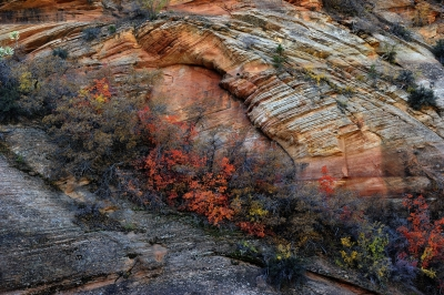 Color Bands Of Zions Np