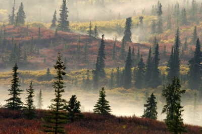 Morning Fog & Autumn Colors