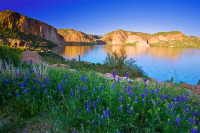 Arizona, Superstiton Wilderness, Lake, Wild Flowers