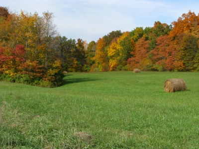 Colorful Hay Field