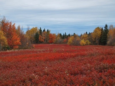 Mother Nature's Red Carpet