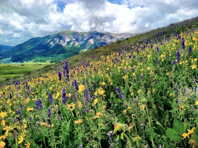 A Sea Of Wild Flowers