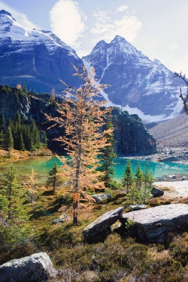 High Country Larches