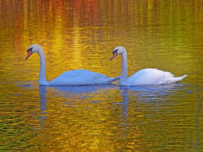 Relaxing On A Golden Pond