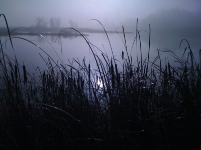Morning Fog In The Rushes