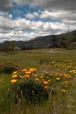 Floral Mountains