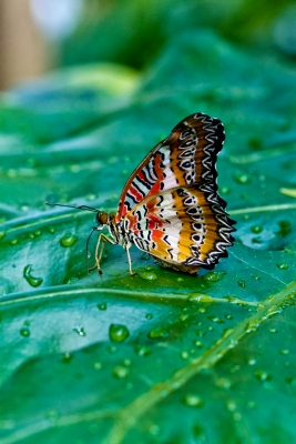 Butterfly On Leaf