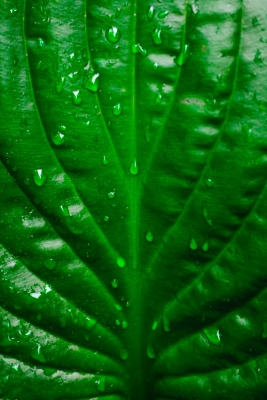 Green Of The Leaf