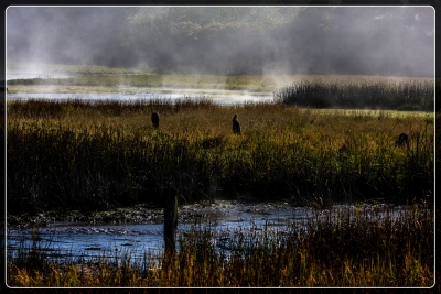Herons On The Marsh On A Foggy Afternoon
