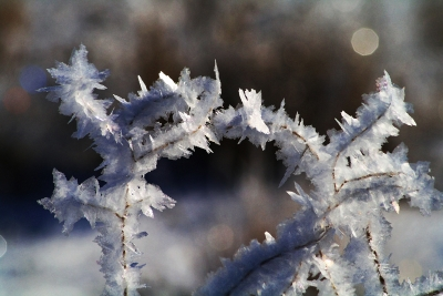 Frost Delight