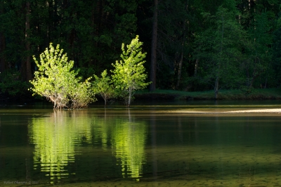 Shimmering Trees And Reflection