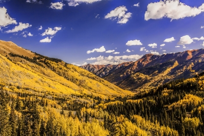 Radiant Aspens Sweep Their Color Across The San Juan Mountains Of Colorado