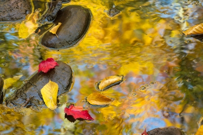 Relections Of Autumn Gold