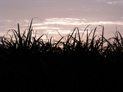 Canefield Sunset