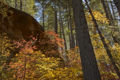 Autumn At Oak Creek Canyon