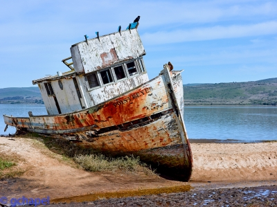 Ship Wrecked Boat At Inverness Ca, Near Point Reyes National Park