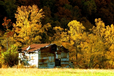 Tin Shed In Fall