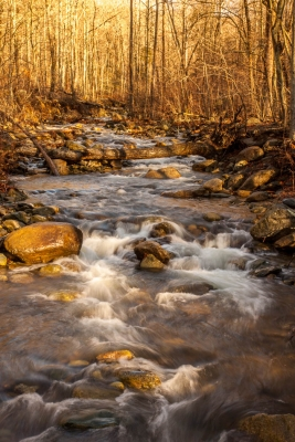 Late Winter In Whiteoak Canyon