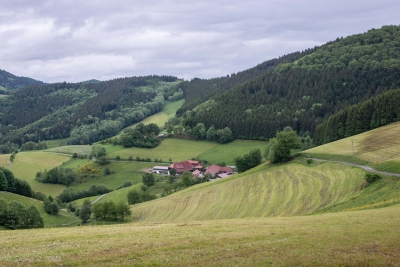 Black Forest Landscape -1