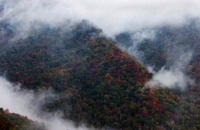 Fall Colors Through The Fog