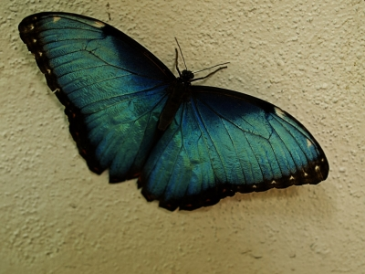 The Other Side Of This Butterfly
