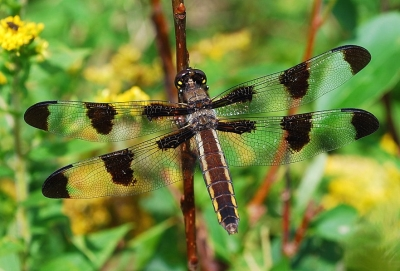 It's A Dragonfly's World